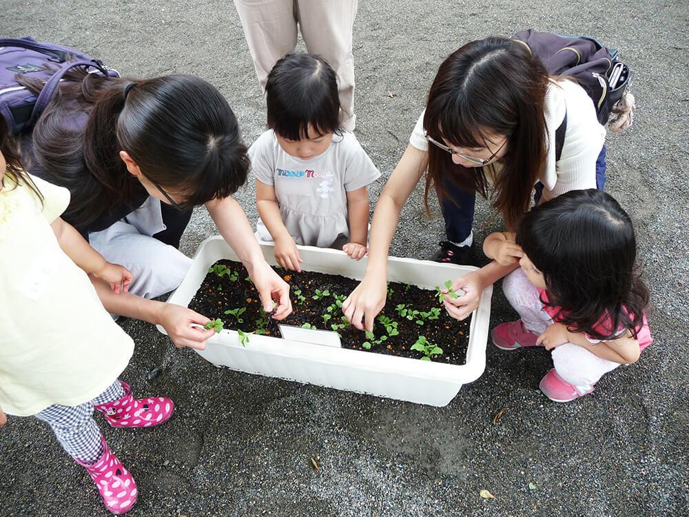 苗を植える子どもたち